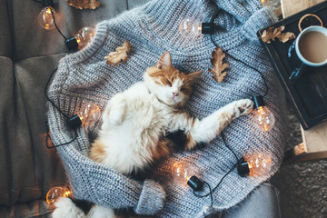 Lazy cat sleeping on woolen sweater