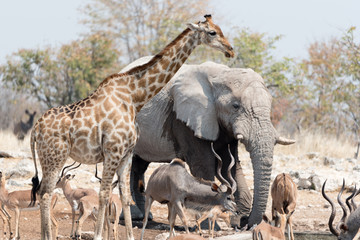 Animals of Etosha