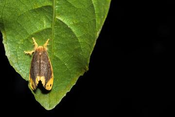 Moth on the leaf