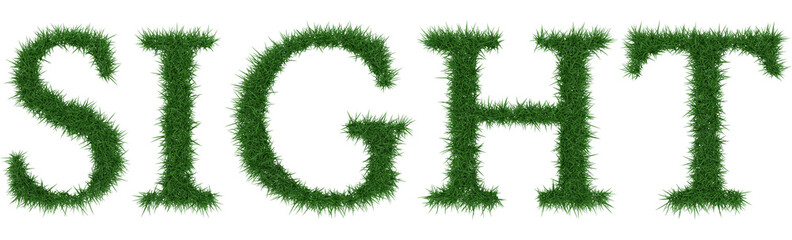 Sight - 3D rendering fresh Grass letters isolated on whhite background.
