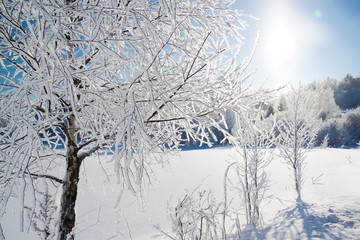 winter landscape with forest,snow and blue sky.