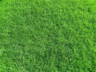 Rollrasen / Graslandschaft / Textur