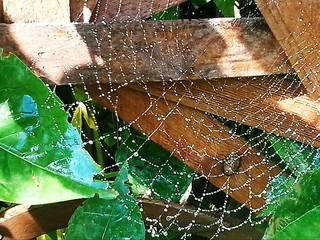 Morgentau / Spinnennetz / Textur