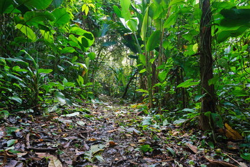 Jungle footpath through lush tropical vegetation, Costa Rica, Central America