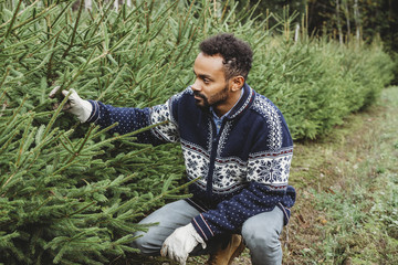 Man worker in a plantation while checking Christmas tree for sale