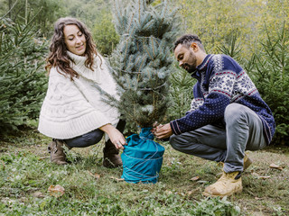 Couple of people in a plantation prepares the Christmas tree to take home