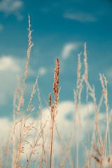 Dry grass and sky