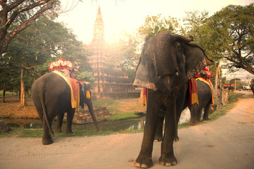 Elephants tour in ancient city Ayutthaya, Thailand.