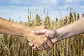 Farmers handshake over the wheat crop