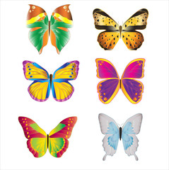 various colorful bright butterflies set on white background