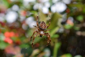 Spider macro photo