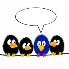 cute black crows and speaking