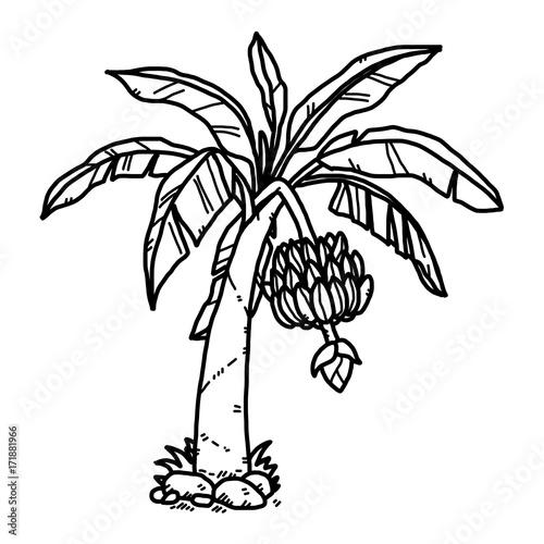 Banana Tree Cartoon Vector And Illustration Black And White Hand