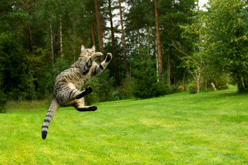 Cat jumping in air and playing