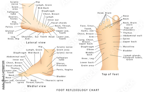 Reflexology Chart Stock Image And Royalty Free Vector Files On