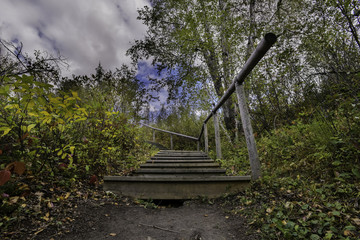Stairs into the trees
