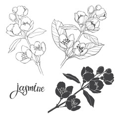 Jasmine. Three isolated vector floral elements for design. Black silhouette and outline on a white background.