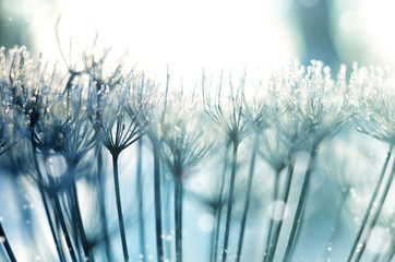Christmas, winter background with frosty dry plants against sparkling bokeh