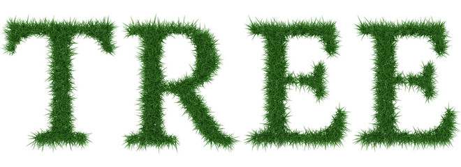 Tree - 3D rendering fresh Grass letters isolated on whhite background.