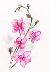 beautiful original red blooming orchids. watercolor art