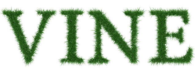 Vine - 3D rendering fresh Grass letters isolated on whhite background.