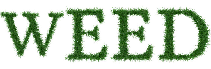 Weed - 3D rendering fresh Grass letters isolated on whhite background.