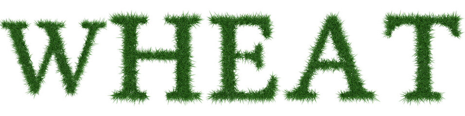 Wheat - 3D rendering fresh Grass letters isolated on whhite background.