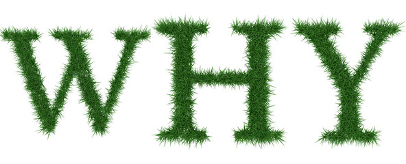 Why - 3D rendering fresh Grass letters isolated on whhite background.