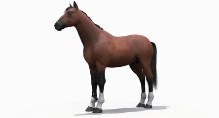 Brown Horse (3D)