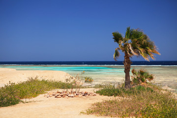 Marine landscape of Marsa Alam (Red Sea), Egypt