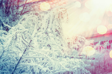 Winter nature background with frozen plants at beautiful sunbeam background with bokeh