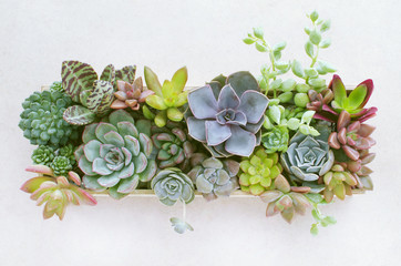 Top view of wooden box of flowering succulent plants