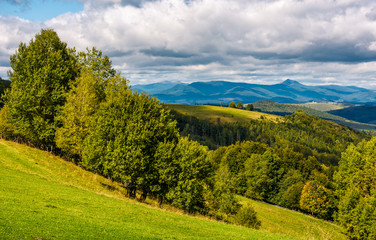 forest on hillside meadow in mountainous area