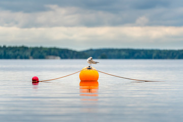 One seagull bird standing resting on an orange buoy on a lake. Calm beautiful seascape view.