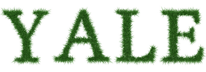 Yale - 3D rendering fresh Grass letters isolated on whhite background.