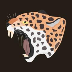 Head of a leopard, leopard