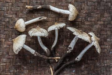 termite mushroom