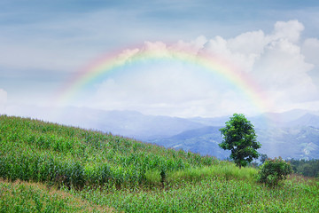 Lonely tree in mountain with rainbow, Composition of nature, Copyspace For Text