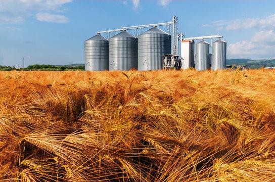 Silos in a barley field.