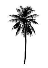 coconut tree, isolated natural palm plant sign, vector illustration