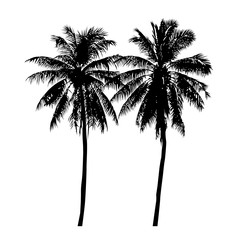 set of silhouette realistic coconut tree, isolated natural palm plant sign, vector illustration