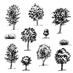 hand drawn set of graphic trees on white background