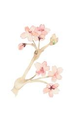 桜、大サイズ