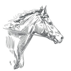 head of horse drawing on white. hand drawn vector illustration