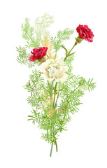 Bouquet of carnation schabaud, white, red flowers, green twigs asparagus, white background, composition for Christmas, Mother's Day, Victory day, digital draw, illustration in watercolor style, vector