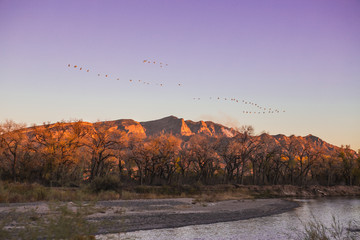 Big flock of geese flying over a beautiful river at sunrise