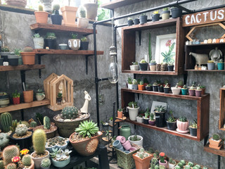 Group of cactus pots, potted plants and houseplants on shelf with grey concrete background. Summer hot weather plants in urban life for office / home decoration