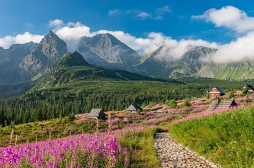 Obraz Tatra mountains, Poland landscape, colorful flowers and cottages in Gasienicowa valley (Hala Gasienicowa), summer tourist trail - fototapety do salonu