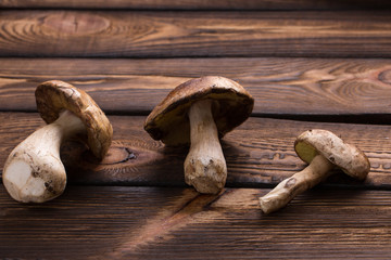 Forest Mushroom over Wooden Background. Autumn Cep Mushrooms.