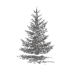 Hand-drawn tree, fir. Realistic image in shades of gray, sketch painted with ink brush
